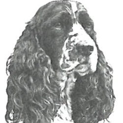 Desert Dames Dog Search and Rescue