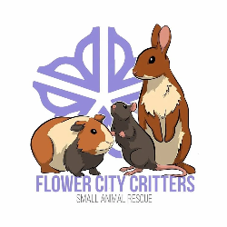 Flower City Critters Small Animal Rescue