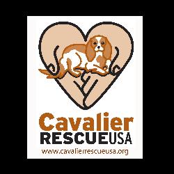 Cavalier Rescue USA