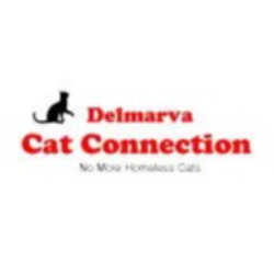 Delmarva Cat Connection