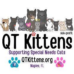 QT Kittens