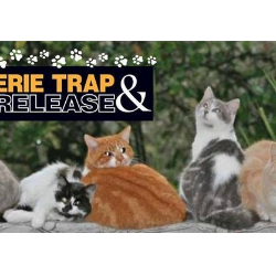 Erie Trap and Release