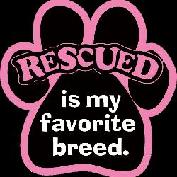 Yorkie Rescue Houston