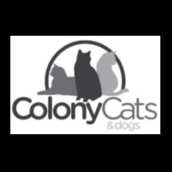 Colony Cats