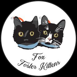 Fox Foster Kittens