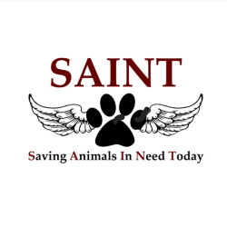 Saving Animals In Need Today