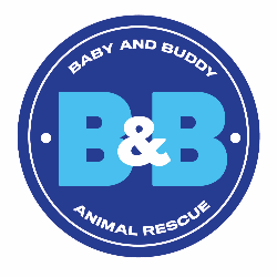 Baby and Buddy Animal Rescue
