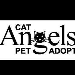 Cat Angels Pet Adoptions