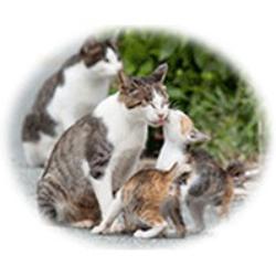 Community Cats Coalition