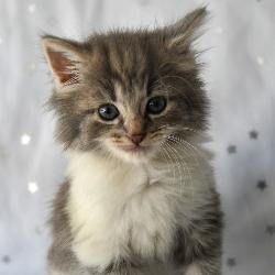 Foundling Kitten Society