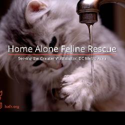 Home Alone Feline Rescue