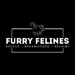 Furry Felines