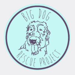 Big Dog Rescue Project