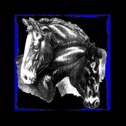Florida Research Institute for Equine Nurturing, Development & Safety, Inc.
