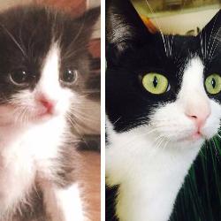 Alfie's Kitten Rescue