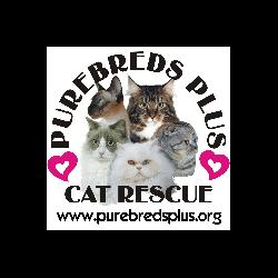Purebreds Plus Cat Rescue