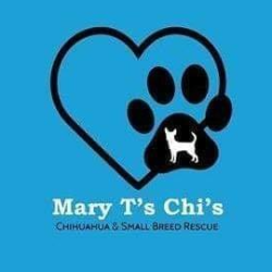 Mary T's Chis: Chihuahua & Small Breed Rescue