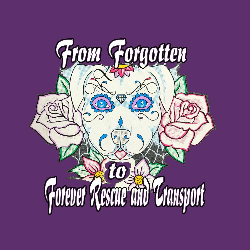 From Forgotten to Forever Rescue and Transport
