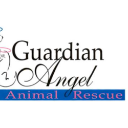 Guardian Angel Animal Rescue