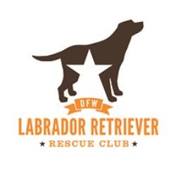 DFW Labrador Retriever Rescue