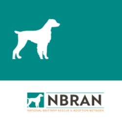 National Brittany Rescue & Adoption Network