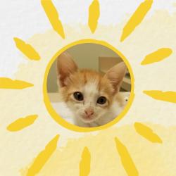 The Sunshine Fund Cat Rescue