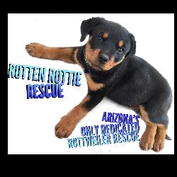 Rotten Rottie Rescue