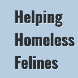 Helping Homeless Felines