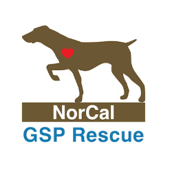 NorCal German Shorthaired Pointer Rescue Inc