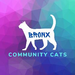 Bronx Community Cats