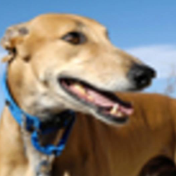 Friends of Retired Greyhounds