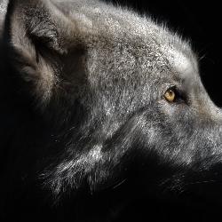 Shy Wolf Sanctuary Education & Experience Center Inc.