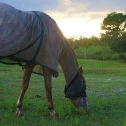Witts End Farm Equine Rescue & Rehabilitation Center,Inc