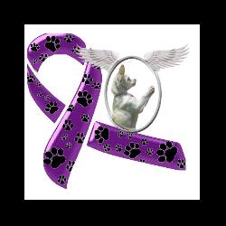Paw Angel Animal Rescue