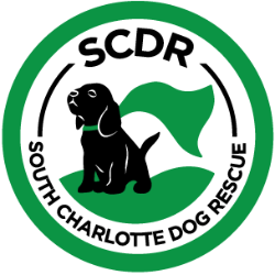 South Charlotte Dog Rescue