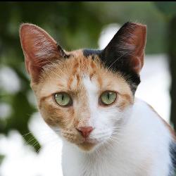 Yolo County Feline Spay And Neuter Group