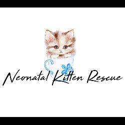 Neonatal Kitten Rescue