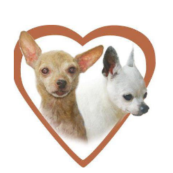 Because of You Chihuahua Rescue Inc