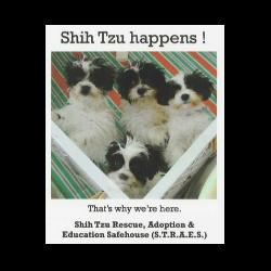 Shih Tzu Rescue Adoption & Education Safehouse