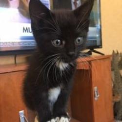 Precious Paws Rescue, Inc.
